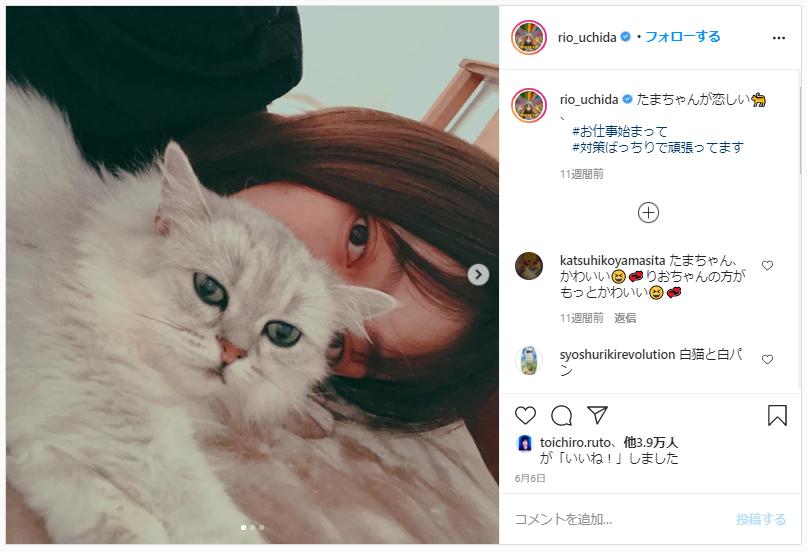 内田理央愛猫「たまま」